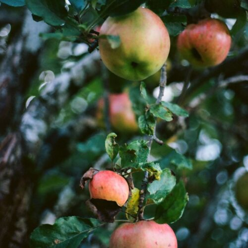 green-and-red-apple-fruit-4058849