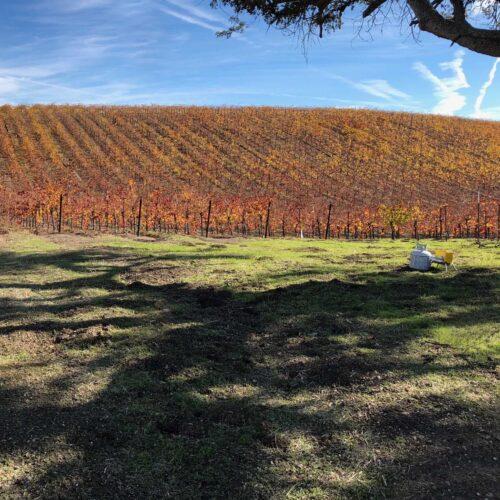vineyard in California a_2-min