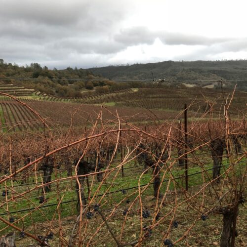 vineyard in california b-min